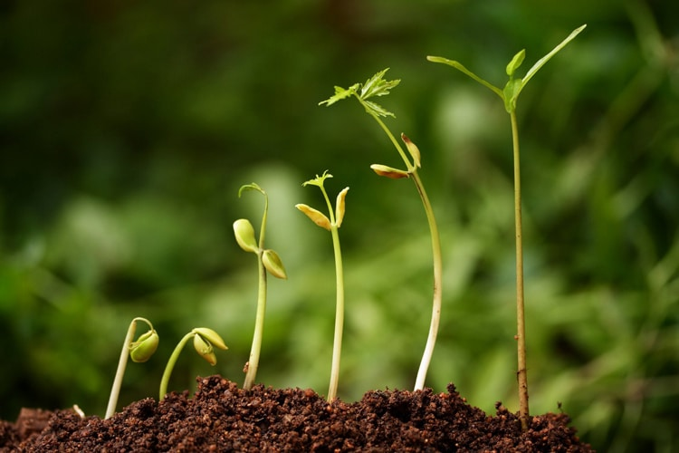 fotolia_9691049_m-sprouting-seeds_web750