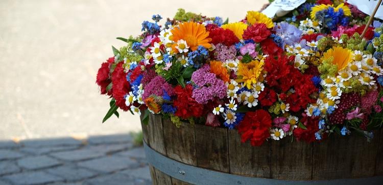 summer-flowers-376764_1280_web750