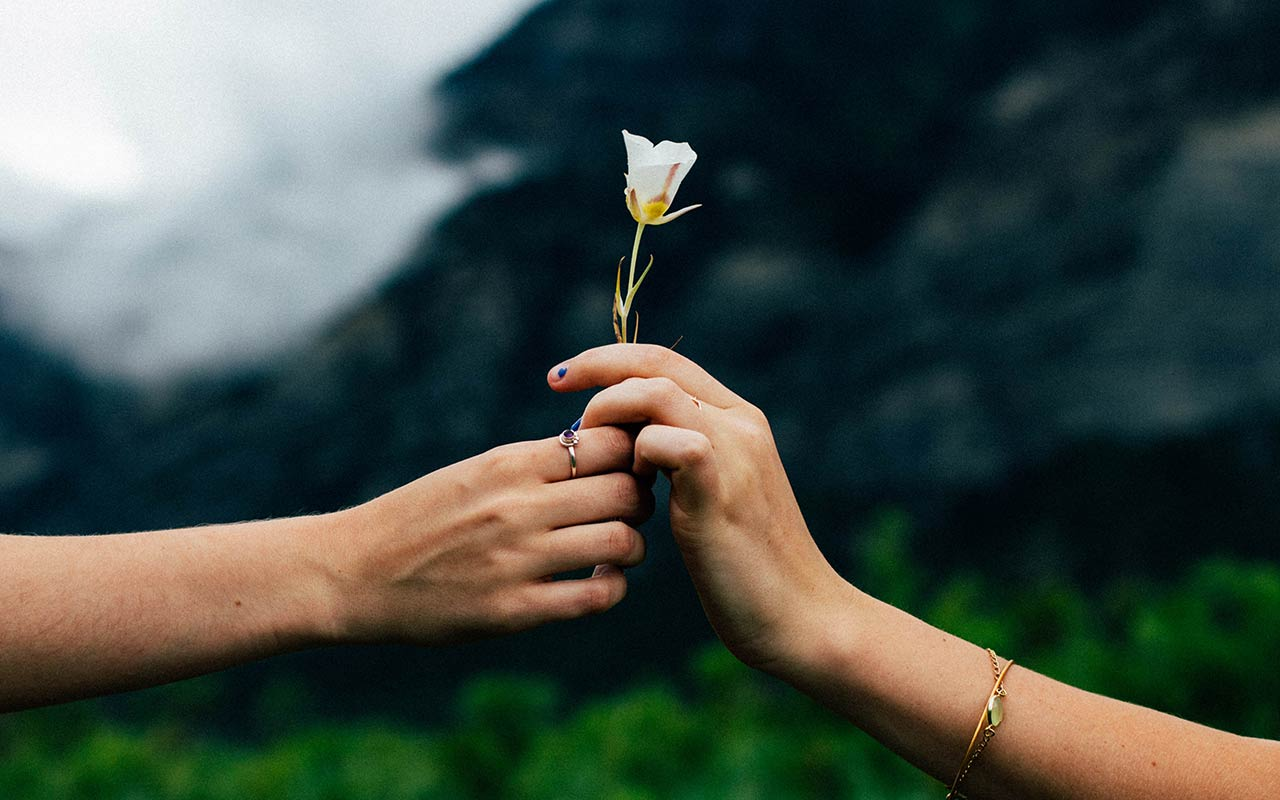 Händer som ger en blomma