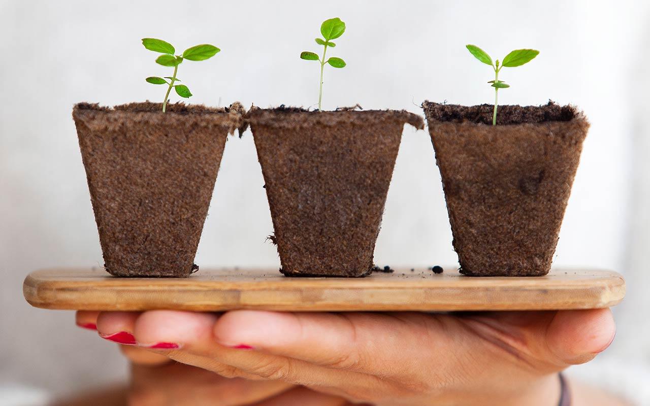 Hållbarhet och miljö - Sticklingar i krukor